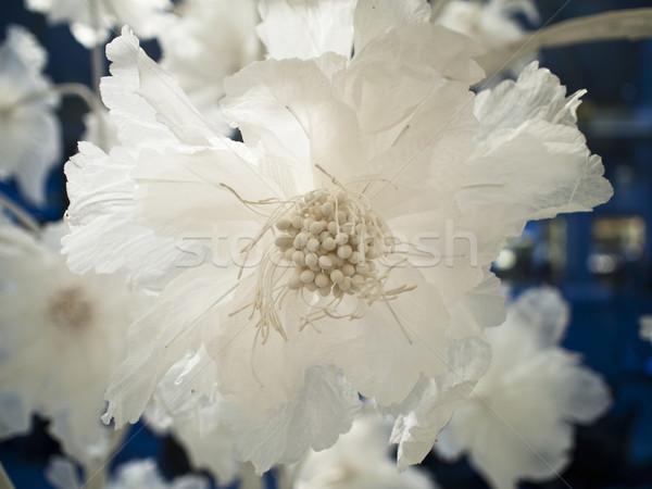 Weiß Seide Blume Detail Ansicht Laden Stock foto © searagen