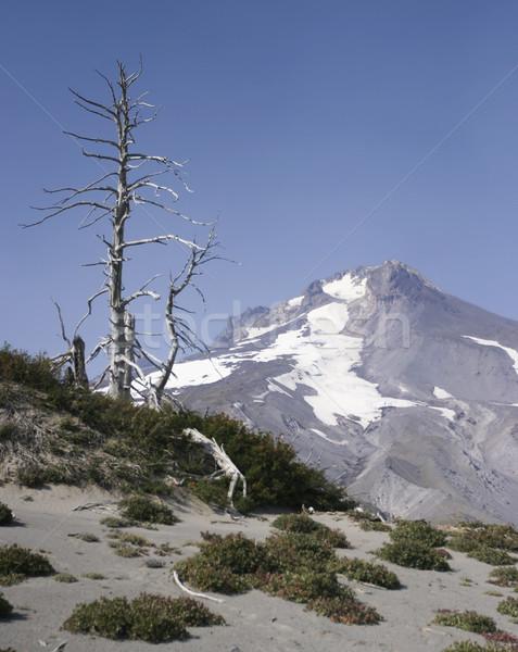 Alpine View of Mt. Hood Stock photo © searagen