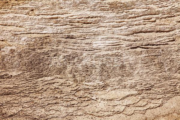 Doku kalsiyum doğal yıl bir Stok fotoğraf © searagen