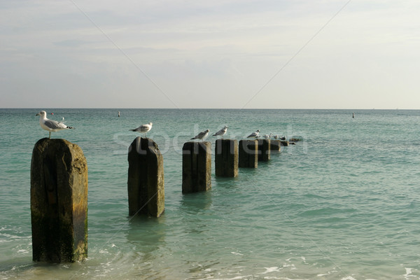 Old Pier With Seagulls Stock photo © searagen