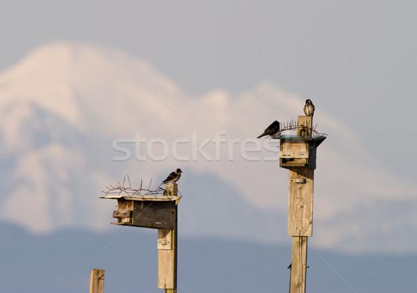 Birdhouse And Mountain Stock photo © searagen