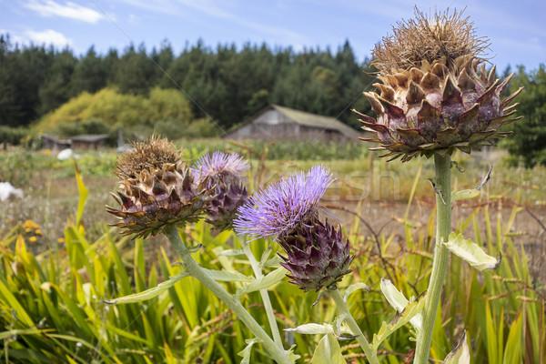 семени несколько органический фермы острове цветы Сток-фото © searagen