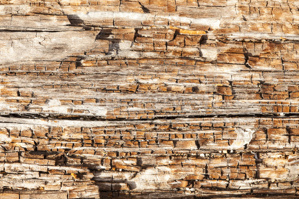 Rotting Wood Close Up Stock photo © searagen