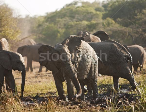 Elefante rebanho lama banho elefante africano elefantes Foto stock © searagen