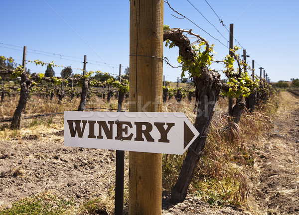 Winery Sign With Old Vines Stock photo © searagen