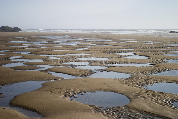 Tidepools On The Beach Stock photo © searagen