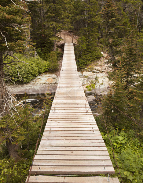 Wood Bridge in Glacier National Park Stock photo © searagen