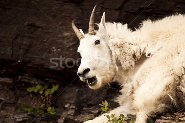 горные Ghost няня коза профиль Сток-фото © searagen