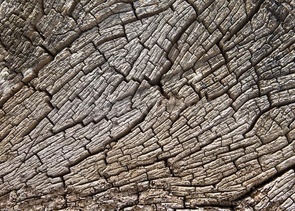 Driftwood tekstury starych wyblakły drzewo Zdjęcia stock © searagen