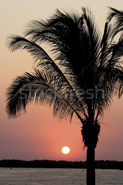 Trópusi mexikói naplemente nap csepp alatt Stock fotó © searagen