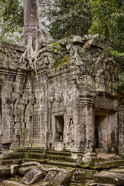 Foto d'archivio: Giungla · tempio · angolo · costruzione · Angkor · Wat · crepe