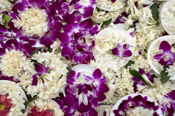 Purple Orchid Offerings Stock photo © searagen