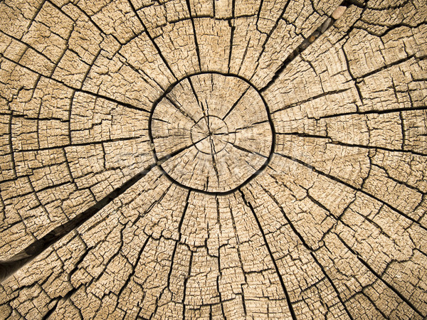 Tree Rings With Cracks Stock photo © searagen