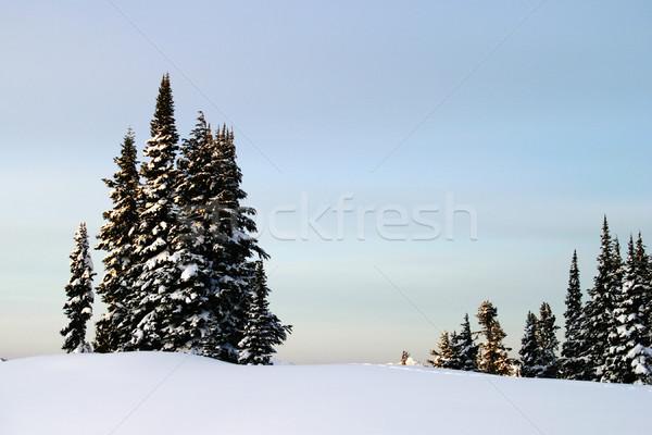 Mountain Trees and Snow Stock photo © searagen