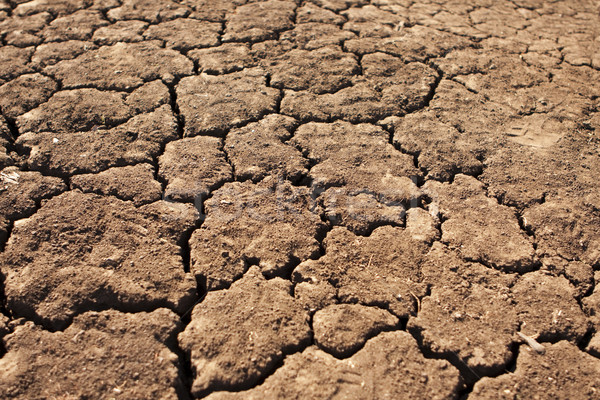 Dry, Parched Earth Stock photo © searagen