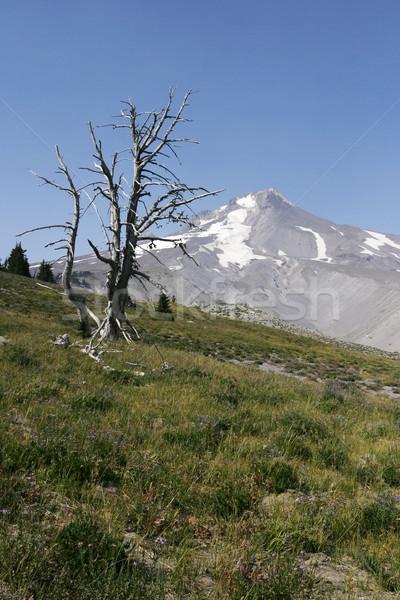 Toter Baum Skelett groß Berg Blumen Baum Stock foto © searagen