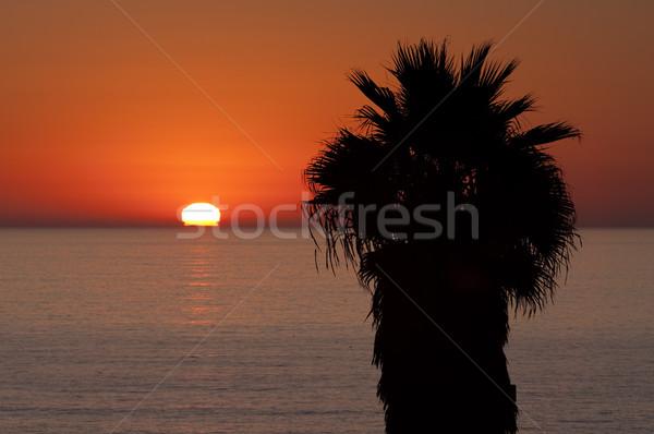 Sol tropical horizonte palmeira pôr do sol para baixo Foto stock © searagen