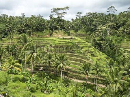 Bali rijst boerderij eiland contouren Stockfoto © searagen