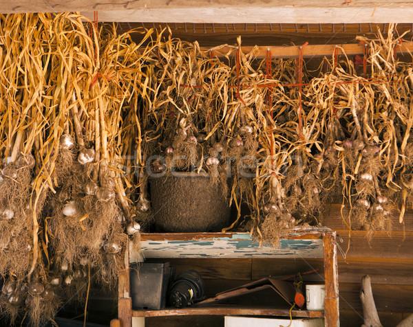 Fokhagyma termény organikus farm akasztás száraz Stock fotó © searagen