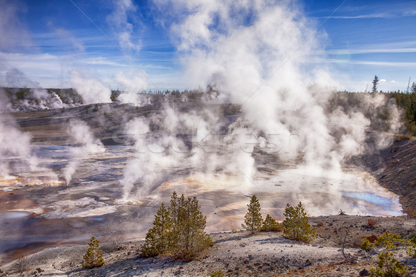 Steam In Norris Geyser Basin Stock photo © searagen