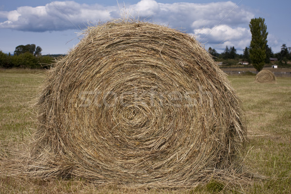 Hay Roll On A Farm Stock photo © searagen