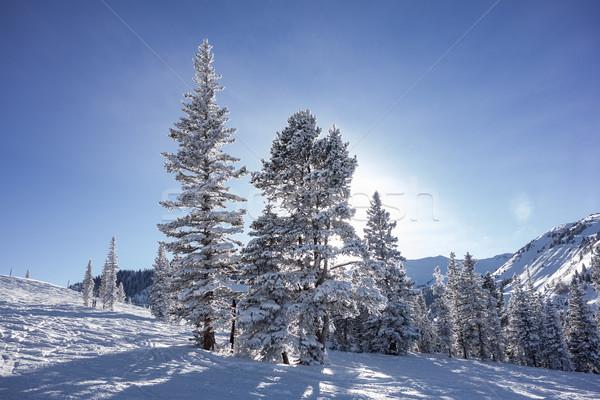 Ağaçlar Kayak güneş görmek üst Stok fotoğraf © searagen