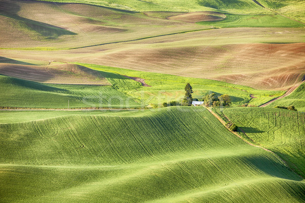 Boerderij Washington heuvels gedekt tarwe Stockfoto © searagen