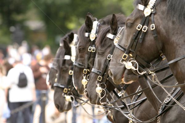 Caballos guardia cuatro pie línea británico Foto stock © searagen