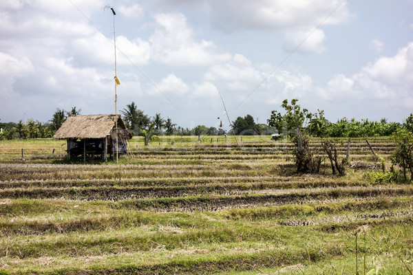 Bali granja arroz pequeño edificio bandera Foto stock © searagen
