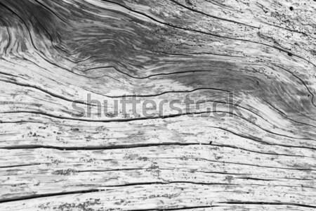 Driftwood streszczenie wzór kawałek san juan wyspa Zdjęcia stock © searagen