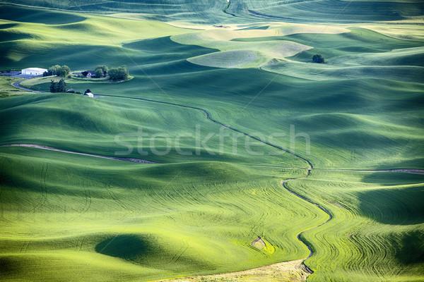 Farm tájkép körül búza mezők dombok Stock fotó © searagen