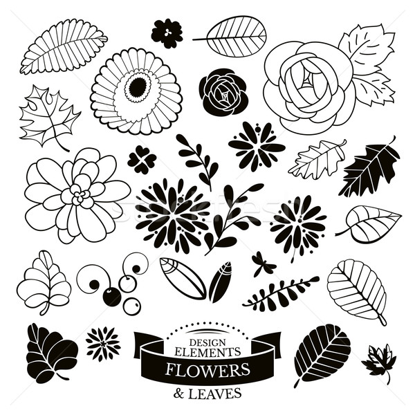 Set of flowers and leaves vector illustration Stock photo © SelenaMay
