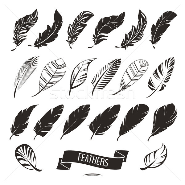 Set of different feathers Stock photo © SelenaMay