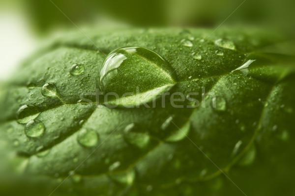 Gotas água folha verde macro primavera grama Foto stock © SelenaMay