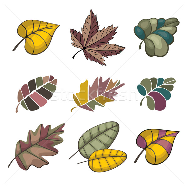 set of autumn leaves Stock photo © SelenaMay