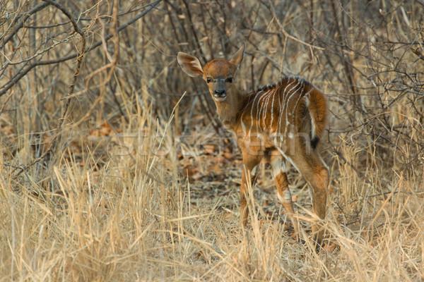 Nuevos nacido jóvenes animales oculto Bush Foto stock © serendipitymemories