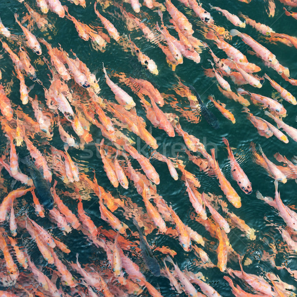 school of fish in the water Stock photo © serg64