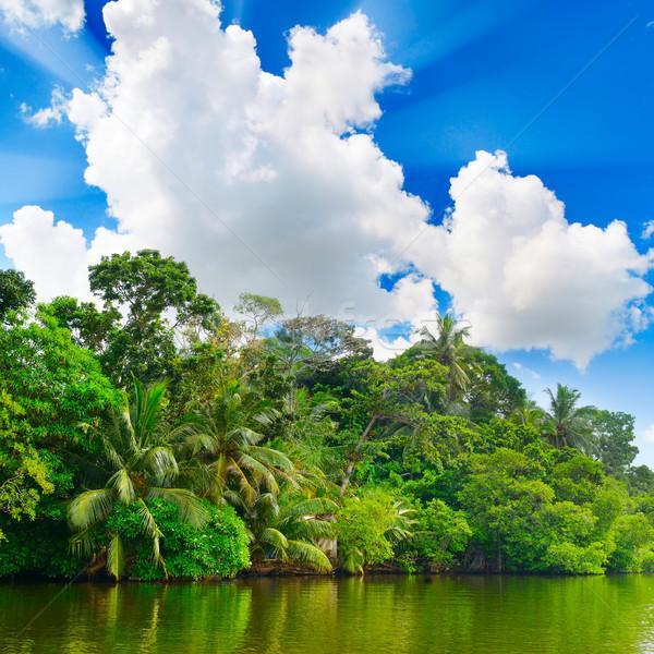 Meer jungle blauwe hemel wolken bos landschap Stockfoto © serg64