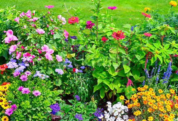 Blossoming flowerbeds Stock photo © Serg64