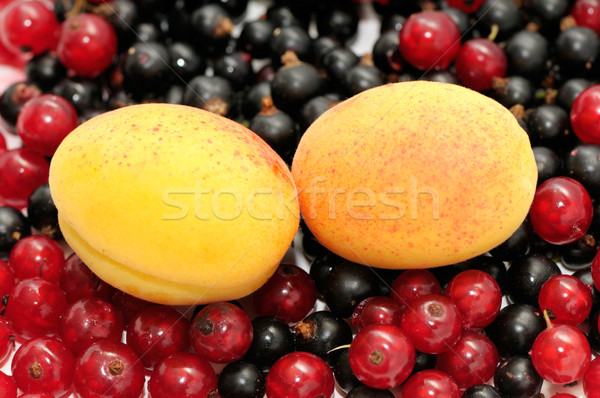 Groseille abricot fruits noir automne pilule Photo stock © Serg64