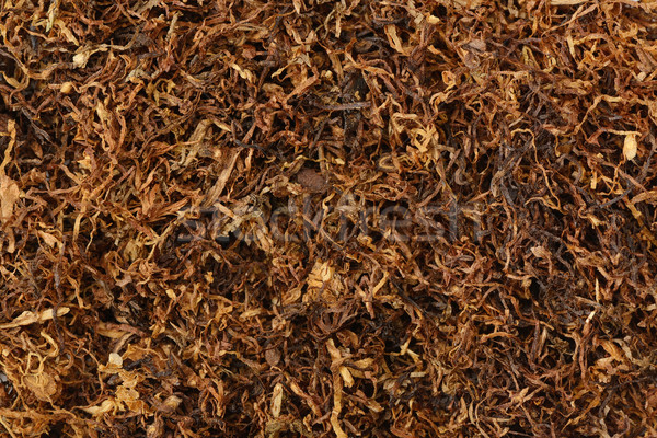 dried smoking tobacco  Stock photo © Serg64