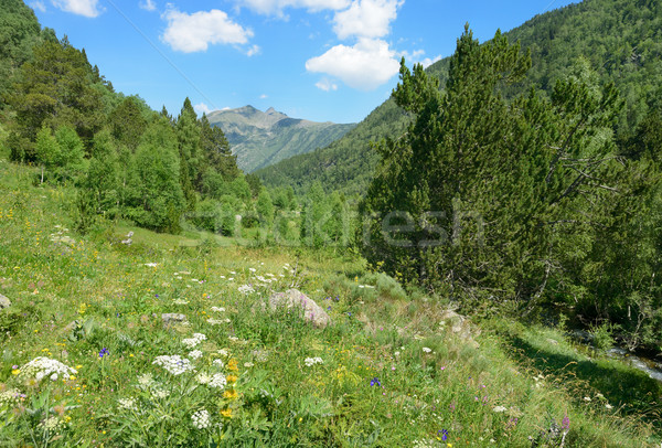 Beautiful meadow with flowers Stock photo © Serg64