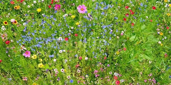 Flores silvestres verde pradera hierba naturaleza hoja Foto stock © serg64