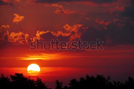 Zonsondergang bomen Rood wolken hemel natuur Stockfoto © serg64