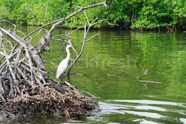 Egret on the lake Stock photo © serg64