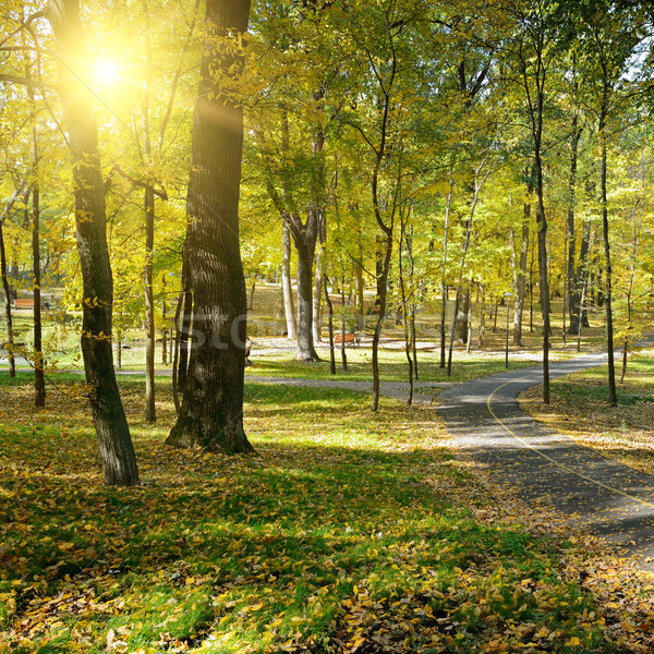 Sol outono parque natureza verde Foto stock © serg64
