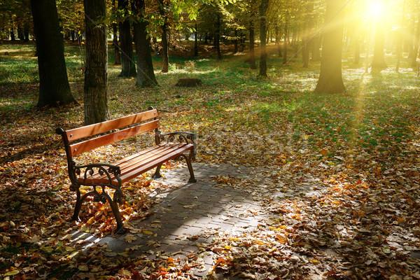 Hajnal ősz park égbolt erdő zöld Stock fotó © serg64