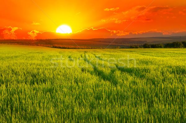 Stock photo: Beautiful sunset on wheat field