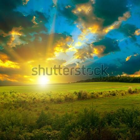 Fényes naplemente tavasz mező fa fű Stock fotó © Serg64