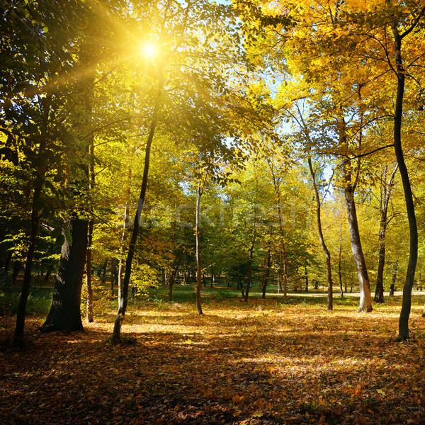 Лучи солнце осень парка трава природы Сток-фото © serg64